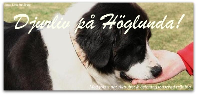 Djurliv på Höglunda